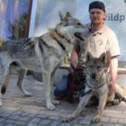 Abendliche Wanderung mit Wolfhunden