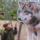 Kinder Spezial: Wolfswanderung in der Dämmerung - 08.02.2020, 16 Uhr